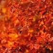 Foto Stock: Red autumn leaves