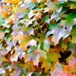 Autumn leaves II — Stock Photo