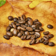 Coffee beans on autumn leaves — Stock Photo #14132676