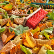 Stock Photo: Sweeping leaves