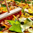 Sweeping leaves - Stock Photo