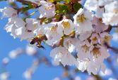 Bee in Flight — Stock Photo