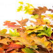 Autumn leaves — Stock Photo #34421167