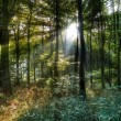 Sun rays in forest — Stock Photo #35624869