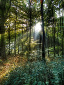 Sun rays in the forest — Stock Photo