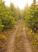 The road of trees — Stock Photo