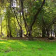 Sunny day in the park. Panarama. Time Lapse — Vídeo Stock