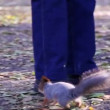Vídeo Stock: Squirrel in the park