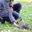Stock Video: Squirrel in the park
