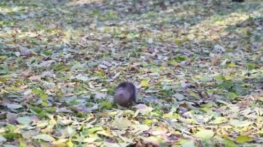 Squirrel in the park — Stockvideo