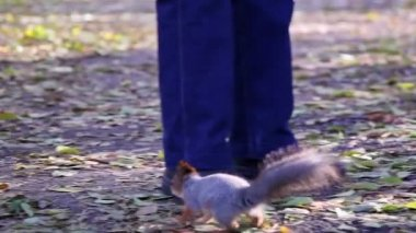 Squirrel in the park — Vídeo Stock