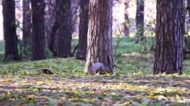 Squirrel in the park — Vídeo de stock