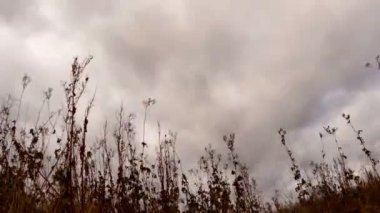 Nubi su erba asciutta — Vídeo de Stock