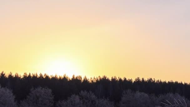 Arbres de la forêt enneigée — Vidéo