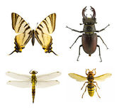 Bug collection — Stock Photo