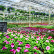 Garden center flower market — Stock Photo #25004365
