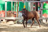 Equinos — Foto de Stock