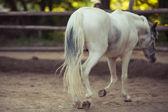White horse — Stock Photo