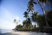 Beach and palms — Stock Photo