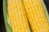 Fresh corn cobs — Stock Photo
