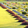 Kanchanaburi war cemetery,Thailand,A sia — Stock Photo