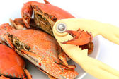 Boiled crabs prepared — Stock Photo