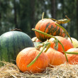 Pumkin and watermelon fruit — Stockfoto