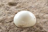 Boá de plumas na areia — Fotografia Stock