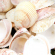 Sea Shell Background or Texture xture - Stock Photo