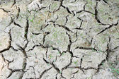 Dry soil textured background — Stock Photo