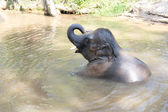 Baby Elephants Taking A Bath — Stock Photo