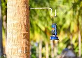 La antigua linterna de queroseno colgando en la palma de coco — Foto de Stock