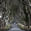 Dark Hedges — Stock Photo #46304837