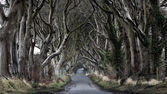 Dark Hedges — Stock Photo