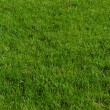 Seamless green grass background — Stockfoto