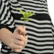 Hand with plant — Stock Photo #35032239