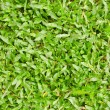 Stock Photo: Close-up of green grass