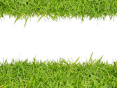 Green grass with white background — Stock Photo