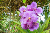 Purple orchid — Stock Photo