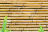 Bamboo fence background — Stock Photo