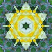 Yellow Mandala Flower — Stock Photo
