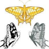 Golden butterfly — Stock Vector