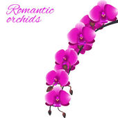Pink orchid — Stock Vector