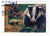 USSR - CIRCA 1975: badger — Stock Photo