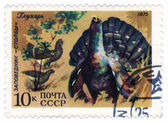 USSR - CIRCA 1975: capercaillie — Stock Photo