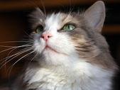 Mooie kat Zie — Foto Stock