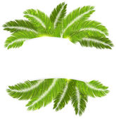 Palm branches — Stock Vector