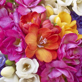 A feast of freesia flowers — Stock Photo