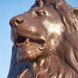Nelson's lion head, London — Stock Photo
