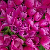 Dark pink fake tulips closeup — Stock Photo